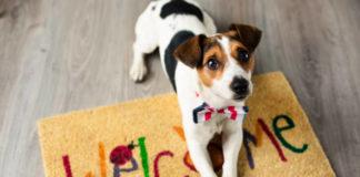 Jak się przygotować na przyjęcie psa do domu?